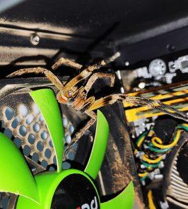 Spider - Flagras de Atendimento